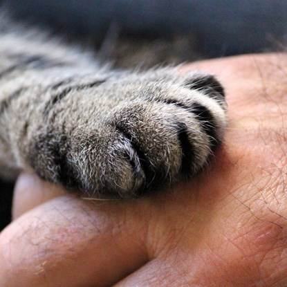 tabby cat paw on hand
