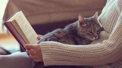 Cat curled up on book lovers' lap