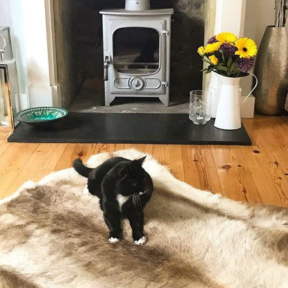 black and white cat on fur rug in living room