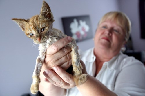 ginger kitten with shaved fur being held by blonde lady