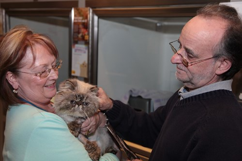 woman and man holding Persian cat in adoption centre
