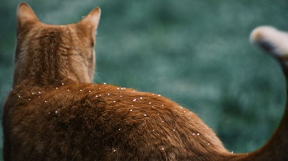 ginger cat with snow on back