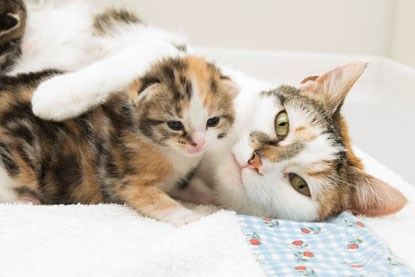white and tabby cat with calico kitten