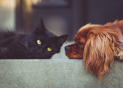 black cat and brown dog sitting on sofa together