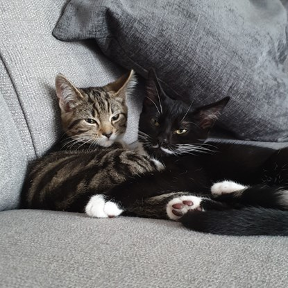 tabby cat and black-and-white cat cuddling on sofa