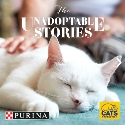 white cat sleeping with Cats Protection and Purina logos