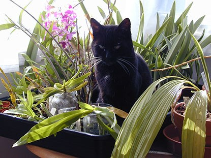 black cat sitting with indoor plants