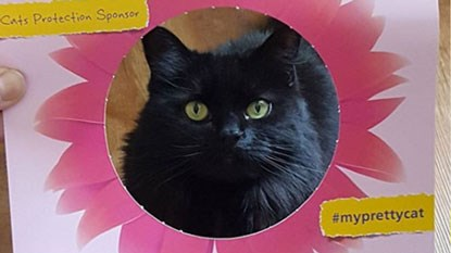 long haired black cat in Cats Protection's flower photo frame