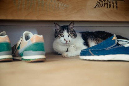 white and tabby cat under bed