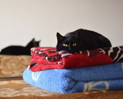 black cat lying on pile of blankets