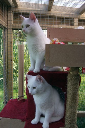 two white cats on cat tree in outdoor pen