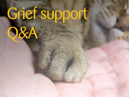 cat's paw with 'grief support Q&A' text
