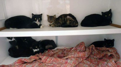 black and white cats on shelving unit