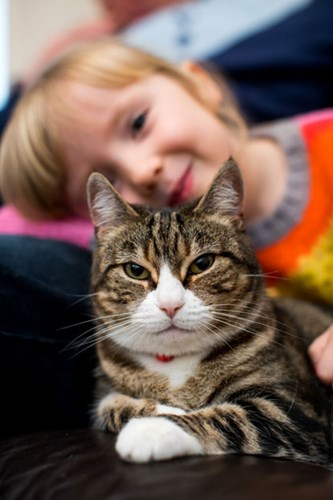 tabby and white cat on sofa with young girl