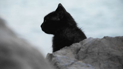 black cat in front of a rock