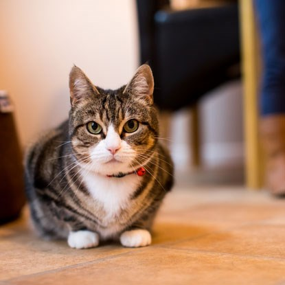 tabby cat crouching down on the ground