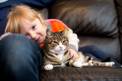 tabby and white cat lying on leather sofa with blonde young girl