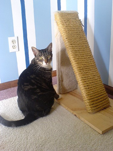 tabby cat sitting next to homemade scratch post