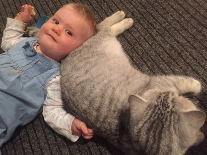 toddler cuddling with grey cat