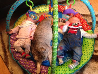 twin babies and grey cat on baby gym