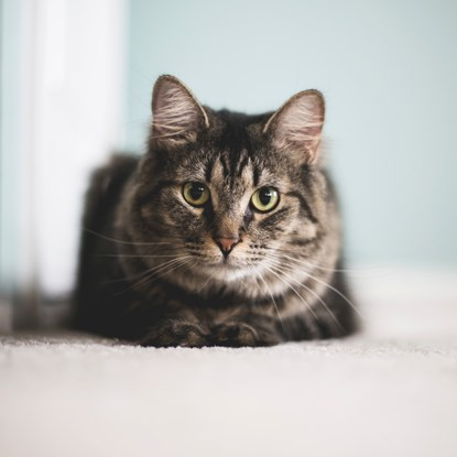 brown tabby cat sitting on the floor