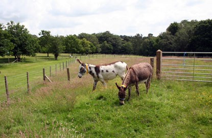 white donkey and brown donkey in a grassy field