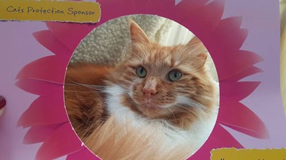 ginger and white longhaired cat in Cats Protection's flower photo frame