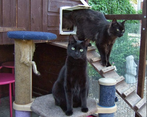 2 black cats in outdoor pen