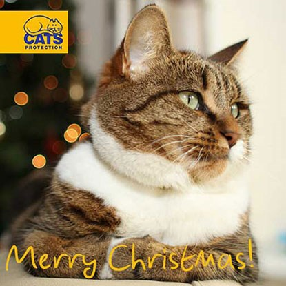 Tabby and white cat with Merry Christmas text
