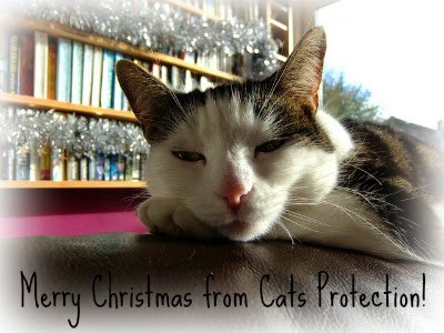 tabby and white cat with Merry Christmas message