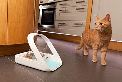 ginger cat next to microchip feeder bowl
