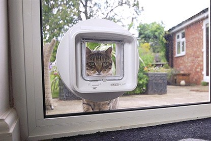 tabby cat looking through microchipped cat flap