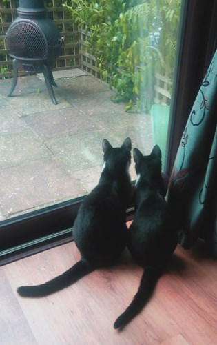 two black cats looking out patio doors