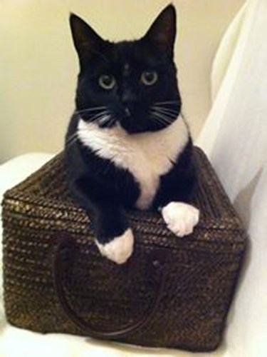 black and white cat in wicker basket
