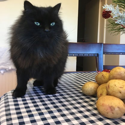 black cat on table next to potatoes