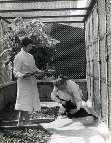 black and white archive photo of two women with a black cat in an outdoor cat pen