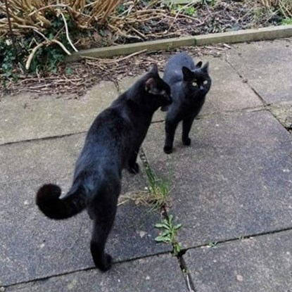 two black cats on garden patio