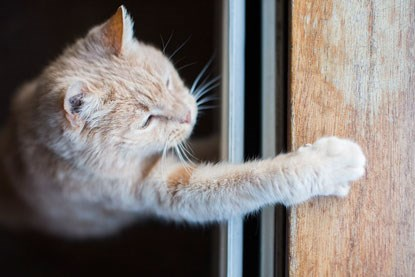 ginger cat pawing at wooden door frame