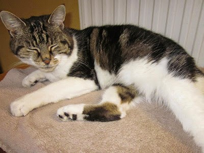 tabby and white cat sleeping by a radiator
