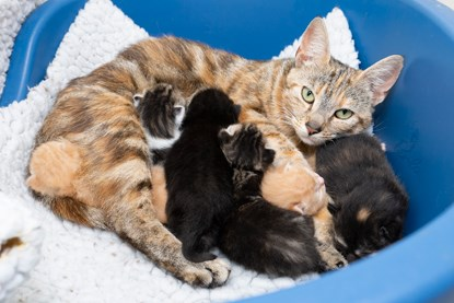 tabby cat with multicoloured kittens in litter