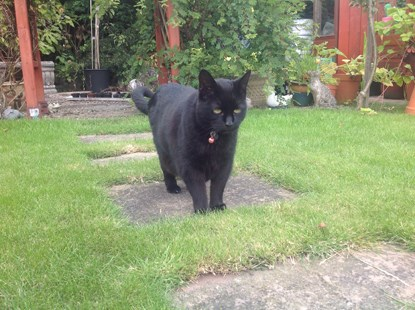 black cat on garden path