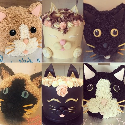 six cakes decorated as cats