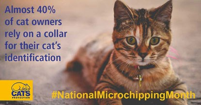 Tabby cat with the words 'Almost 40% of cat owners rely on a collar for their cat's identification' and 'National Microchipping Month'