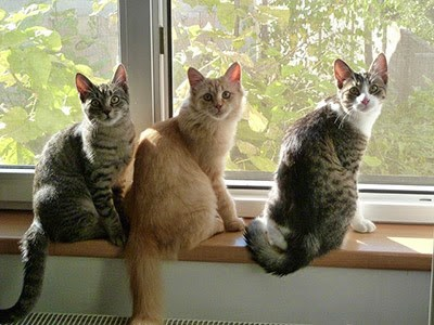 three cats sitting on windowsill
