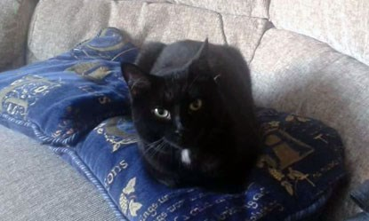 black cat sitting on blue cushions