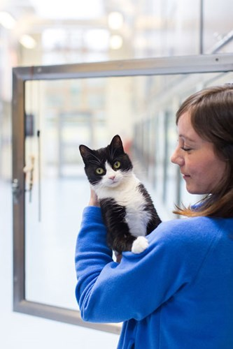 lady in cat adoption centre holding a black and white cat