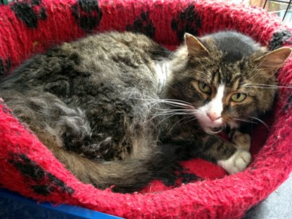 tabby cat in red cat bed