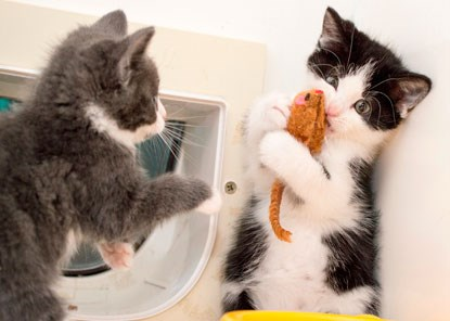 two kittens playing with catnip mouse toy