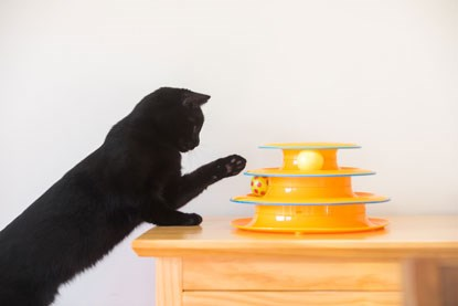 black cat playing with interactive spinning ball toy