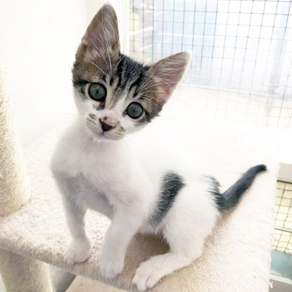 tabby and white kitten on cat play tower